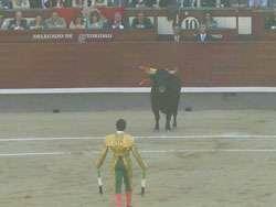 Бои быков Мадрид
