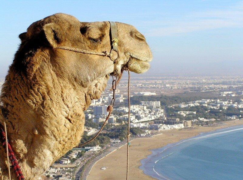 Марокко. Интересные факты